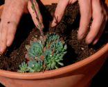 composición plantas crasas maceta plato - 3