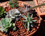 composición plantas crasas maceta grande 7