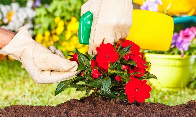 C mo eliminar las plagas en las plantas decogarden for Como evitar los gatos en el jardin