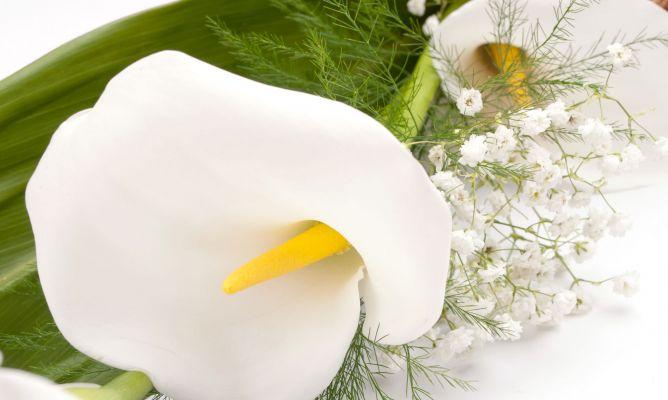 Cala O Lirio De Agua Arreglos Florales