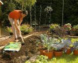 Cómo hacer un huerto de plantas ornamentales - Paso 1