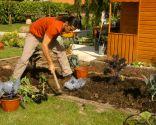 Cómo hacer un huerto de plantas ornamentales - Paso 4