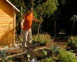 Cómo hacer un huerto de plantas ornamentales - Paso 5