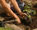 Cómo hacer un huerto de plantas ornamentales - Paso 6
