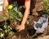 Cómo hacer un huerto de plantas ornamentales - Paso 8