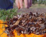 Materia orgánica y materiales para usar en el compost: hojarasca