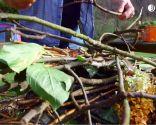 Materia orgánica y materiales para usar en el compost: ramas trituradas