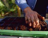 Cómo hacer un semillero de hortalizas - Paso 4