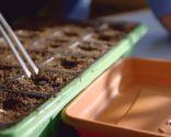 Cómo hacer un semillero de hortalizas - Paso 6