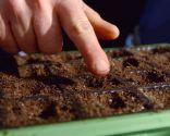 Cómo hacer un semillero de hortalizas - Paso 7