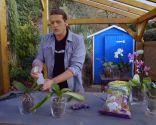 Cómo recuperar una orquídea - Paso 3