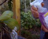 Cómo recuperar una orquídea - Paso 4