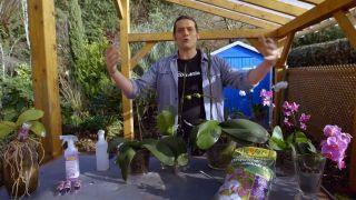 Cómo recuperar una orquídea