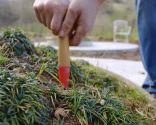 Abonar los árboles y arbustos en invierno - Paso 1