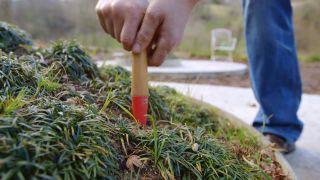 Abonar un árbol en invierno con abono en forma de clavos - Paso 1