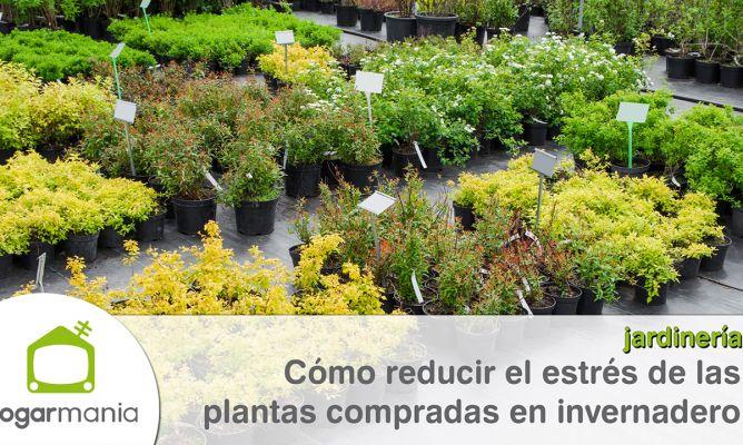 C mo reducir el estr s de las plantas compradas en - Hogarmania jardineria ...