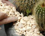 Plantación de cactus en contenedor - gravilla