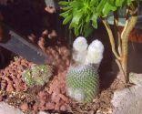 Plantas crasas con acolchado de grava volcánica
