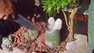 deco-0641-acolchado-tipos-variedades-grava-vocanica-plantas-crasas