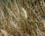 Plantas con tonos pajizos en invierno - Variedades