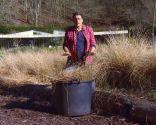 Plantas con tonos pajizos en invierno - Compost de paja