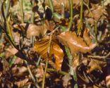 Plantas con tonos pajizos en invierno - Seto de hayas