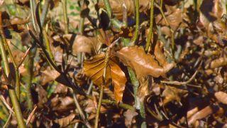 Plantas con tonos pajizos en invierno