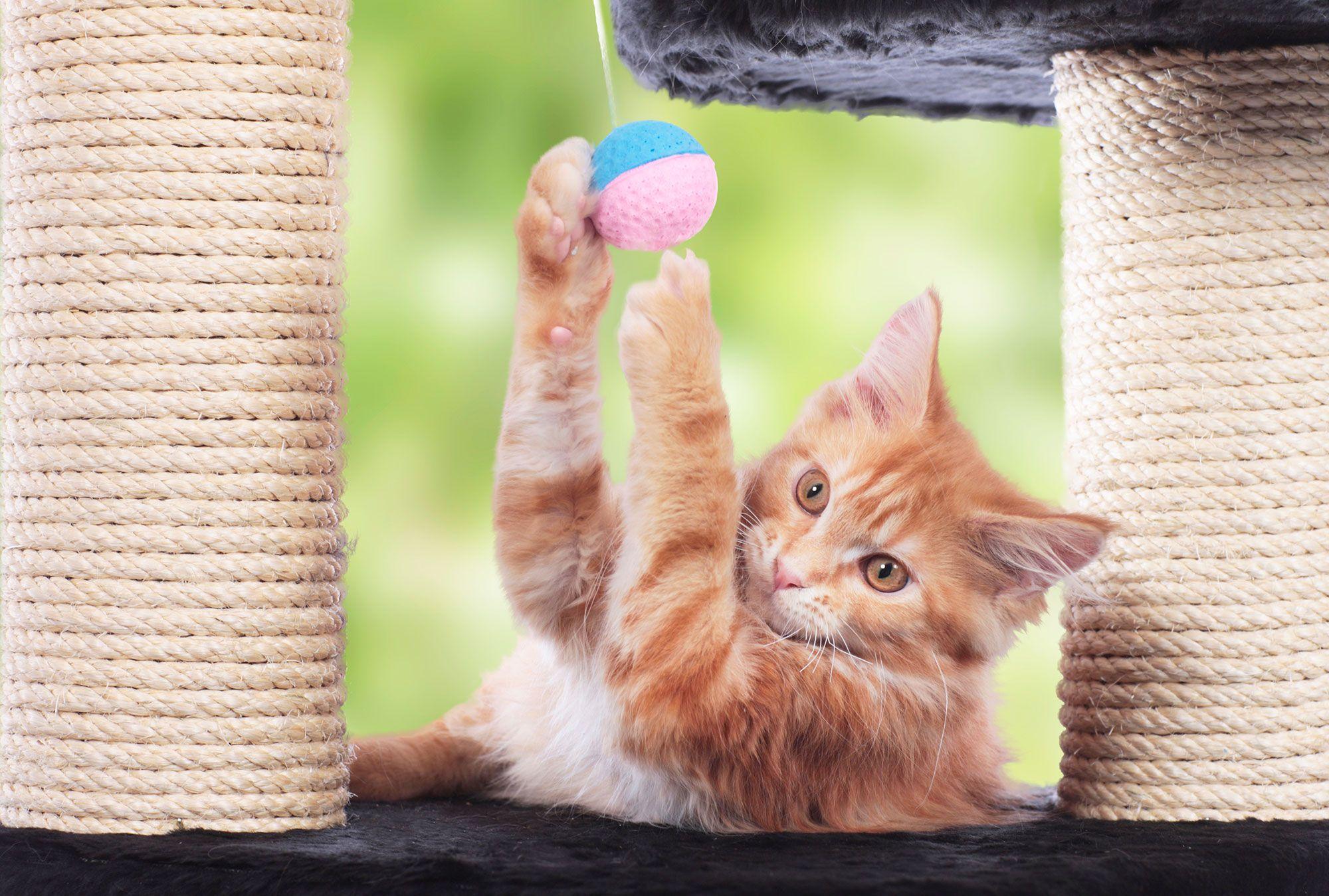 rascadores gatos actividad