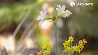 Composición con bulbos de narcisos, muscarias y jacintos