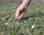 Cómo regenerar el césped después del invierno - Exceso de humedad