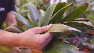 Recuperar una planta tras una helada