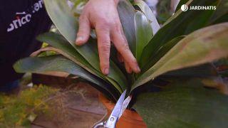 Recuperar plantas tras una helada