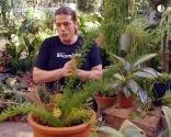 Cómo recuperar las plantas tras una helada - Esparraguera