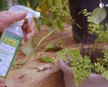 Cómo recuperar las plantas tras una helada - Abono foliar helecho