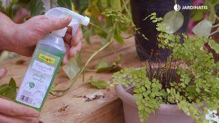 Recuperar las plantas tras una helada