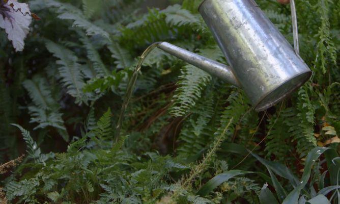 Tipos de abonos y su uso en jardiner a bricoman a - Bricomania jardineria ...