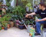 Tipos de abonos y su uso en jardinería - Abonos aplicar dosis adecuada