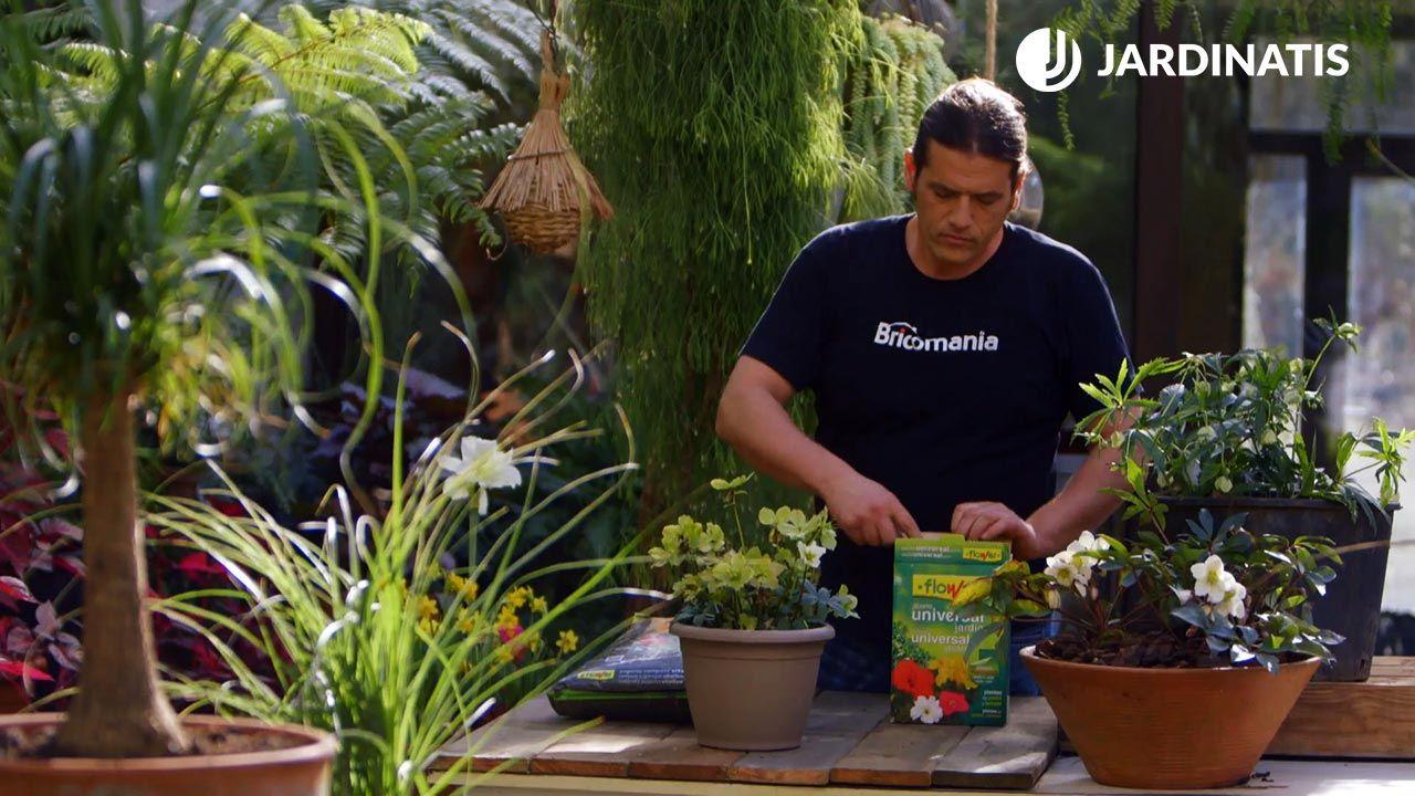 Tipos de abono y su uso en la jardinería