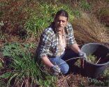 Poda de las plantas vivaces a finales de invierno e incorporación de mantillo - Poda hemerocallis