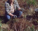 Poda de las plantas vivaces a finales de invierno e incorporación de mantillo - Erigeron karvinskianus