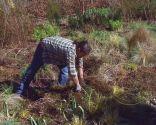 Poda de las plantas vivaces a finales de invierno e incorporación de mantillo - Tijeras de poda
