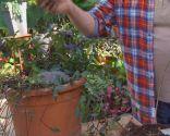 El acodo, técnica de reproducción para azaleas y magnolios - Acodo no siempre funciona