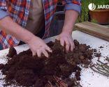 Esquejes de hortensias y rosales - Mezcla sustrato de plantación