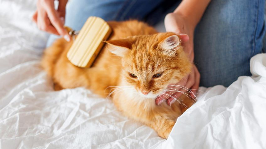 La higiene de los gatos | Best for Pets