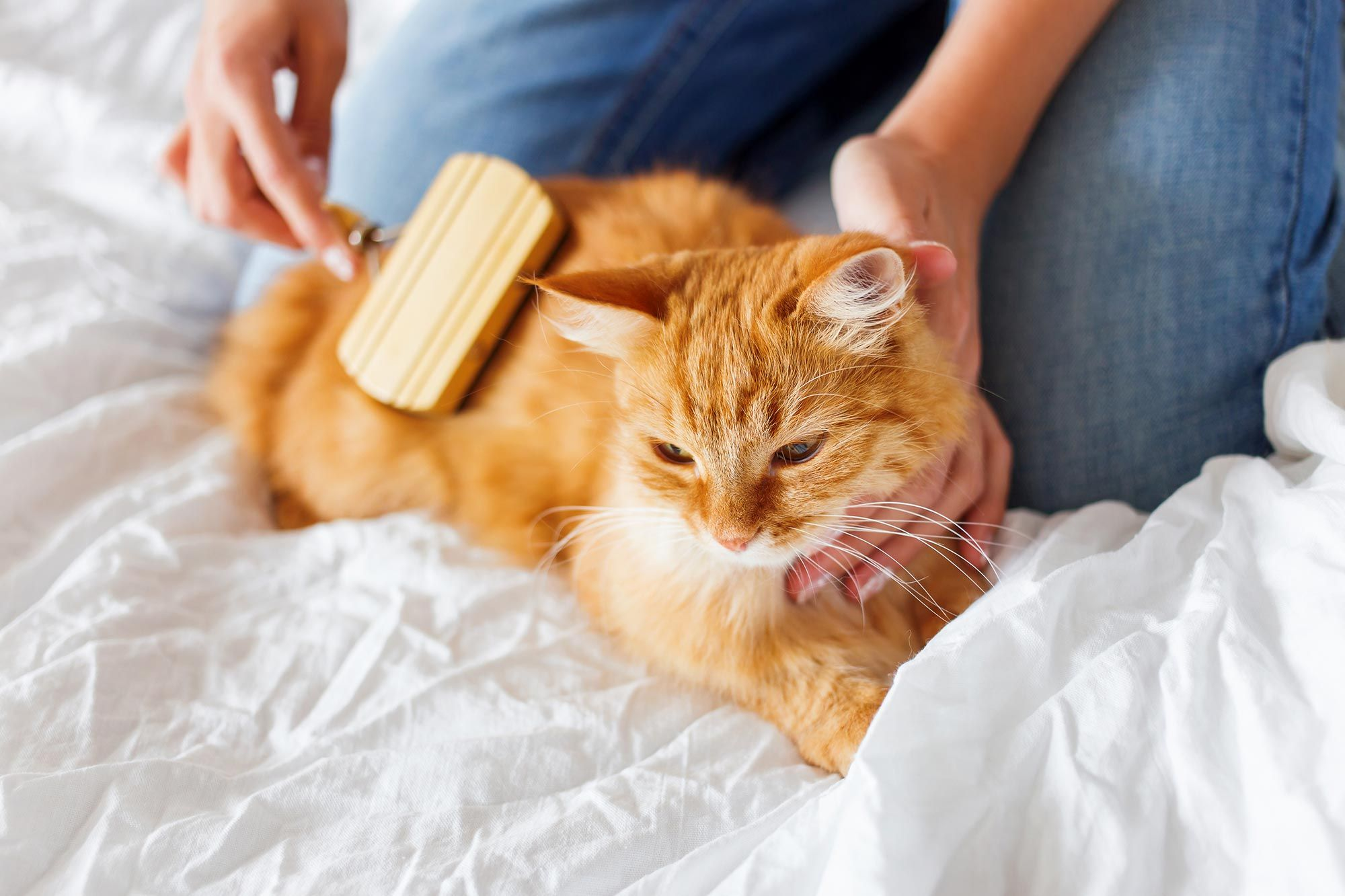 cepillar gato