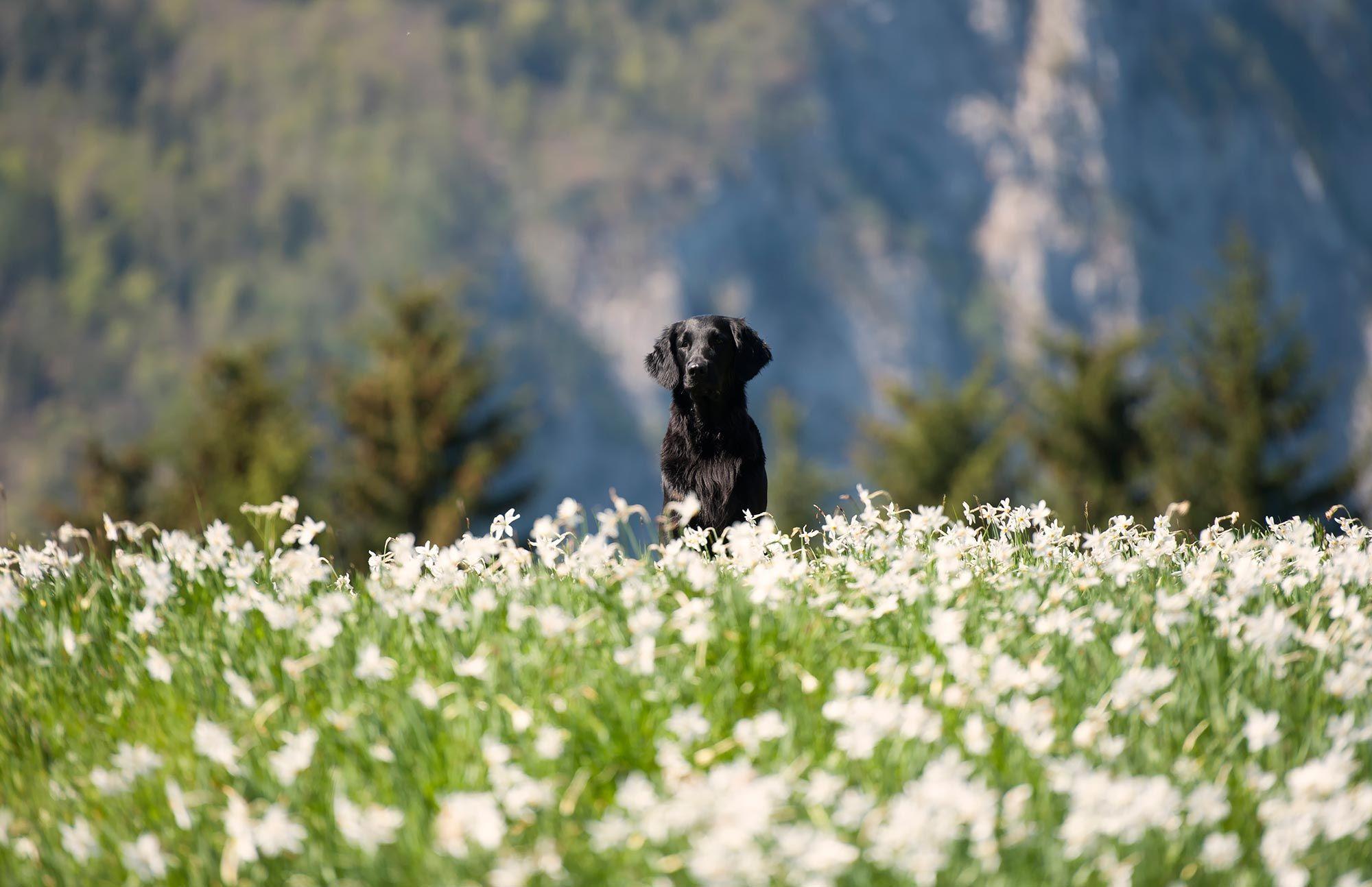 alergias primavera perros - síntomas