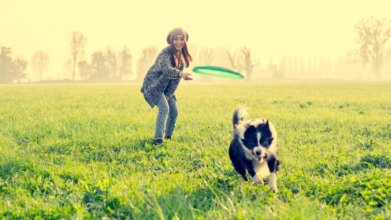 Consejos para jugar con tu perro - Hogarmania