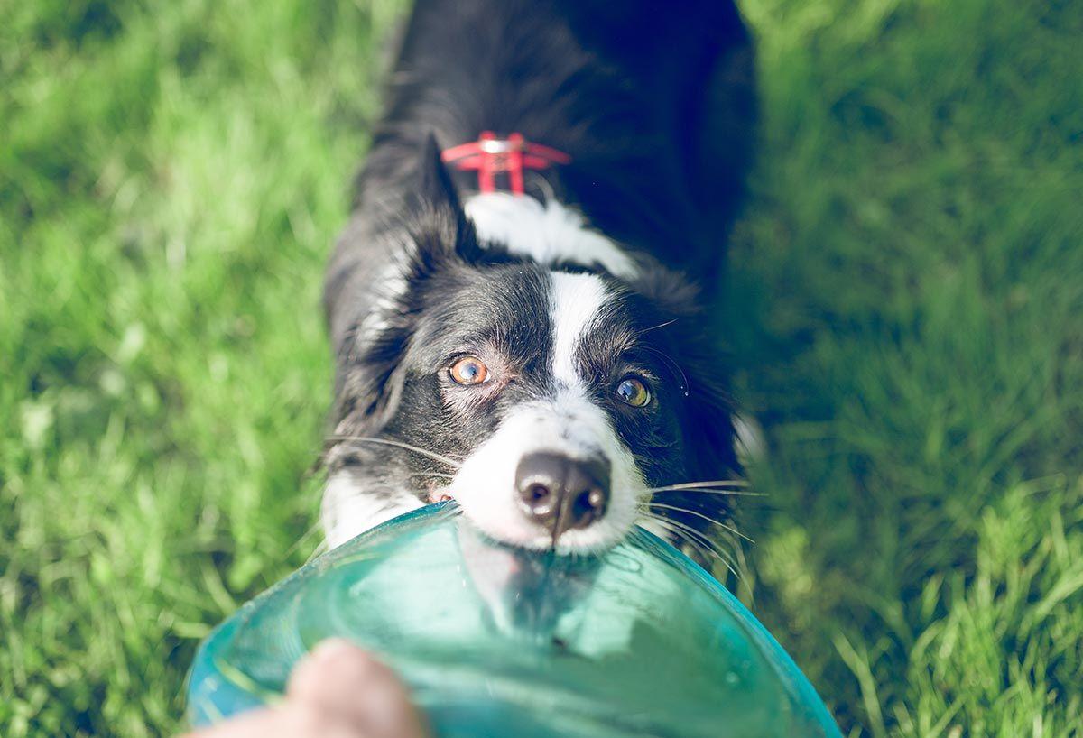 importancia juego perros