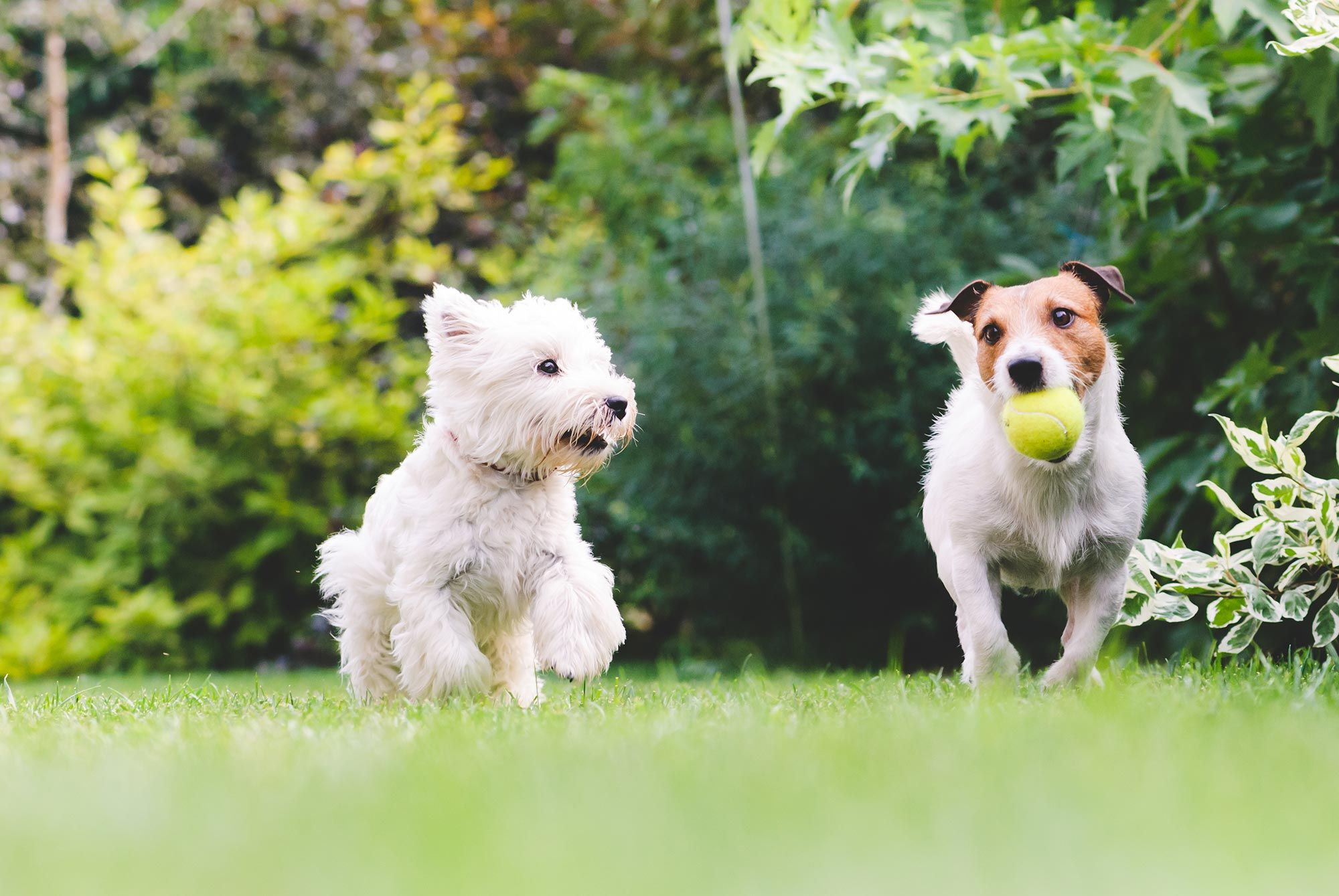 mascotas perros juego pelota