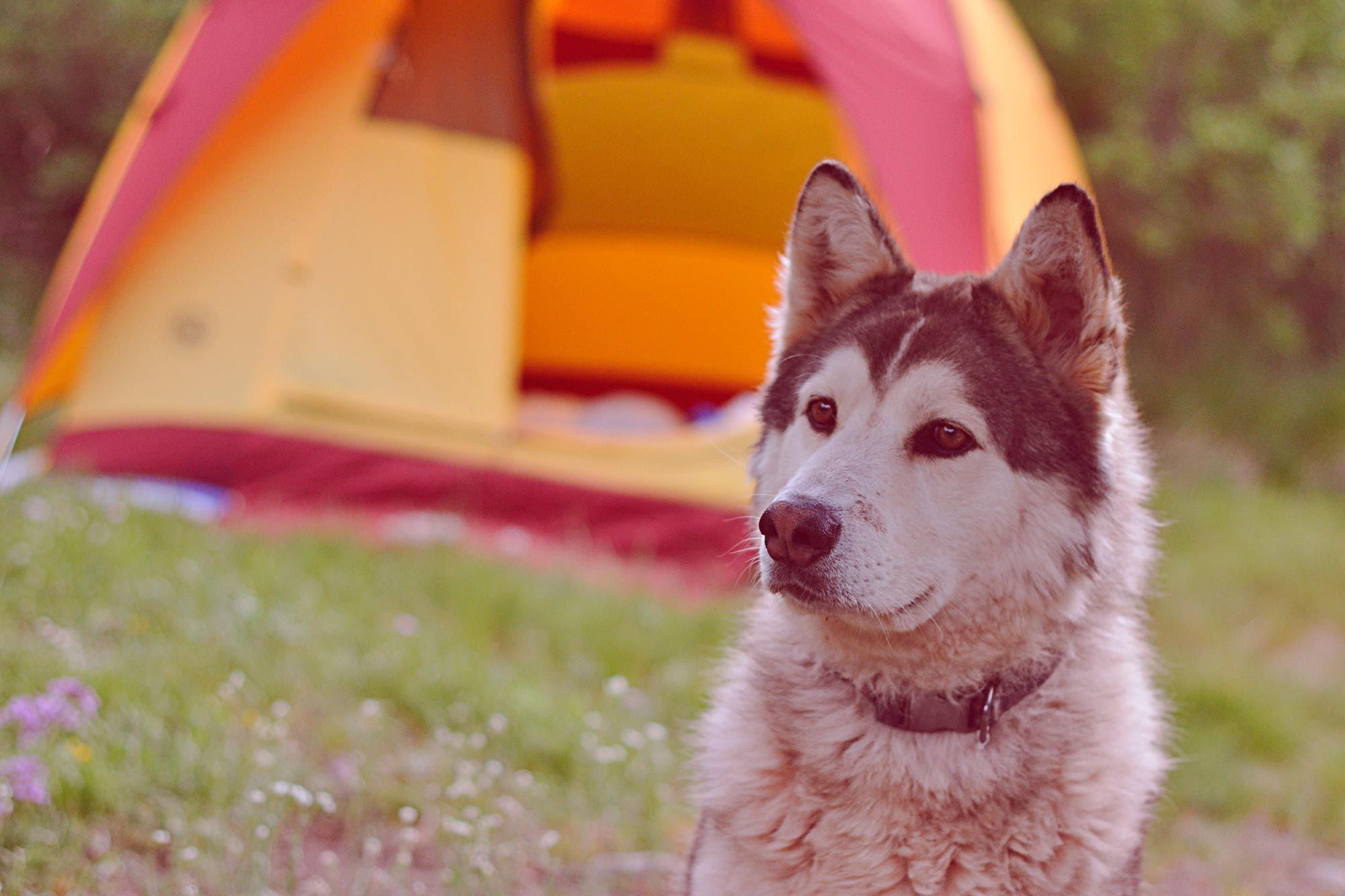 planes con perros en verano - paso 2